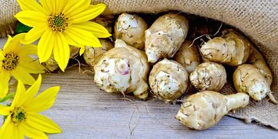 Стоит ли выращивать топинамбур в своем огороде