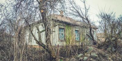 Омоложение старого сада