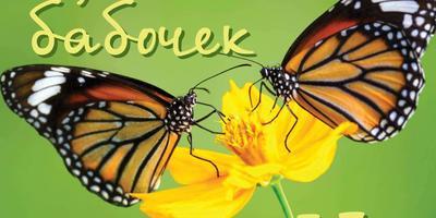 На 7 Дач — выходные с бабочками!