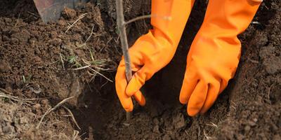 Ошибки при подготовке сада к зиме: посадка, обрезка, побелка