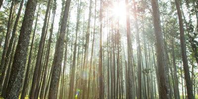 Плюсы и минусы различных видов твердого топлива для котлов: древесина и её производные