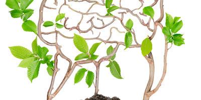 Агротехника смысла: ликбез для начинающих земледельцев