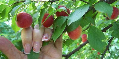 Красивые ногти и дача - это совместимые понятия?