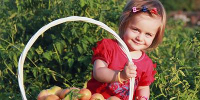 Наш первый урожай помидор =)