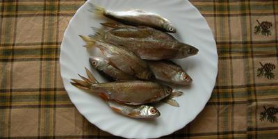 Рыбные котлеты