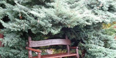 Уютный уголок. Скамейка для влюбленных