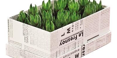 Мегавозможности мини-растений