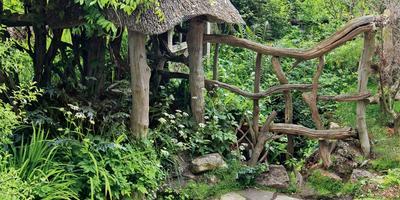 Пригласите в гости лес, или Сад для лентяев