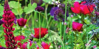 Цветочные фантазии: составляем эффектные композиции для сада