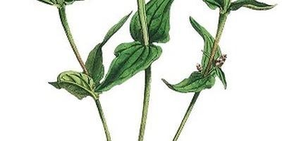 Оцените циннию: виды, сорта и идеи композиций