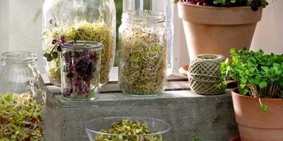Про ростки: как получить зелень из семян