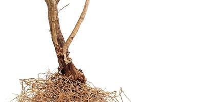 Крепкий сон — залог здоровья, или Как сохранить саженцы до весенней посадки
