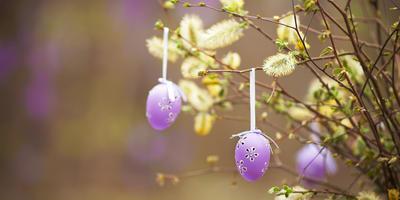 Сезонные работы в саду и огороде: конец апреля – начало мая