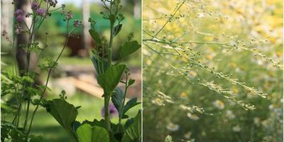 Разделяй и сажай: неботаническая классификация травянистых многолетников