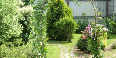 Как решить проблемы сада с помощью ландшафтного дизайна. Часть 2