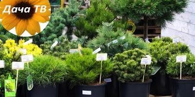 Всё о растениях с закрытой корневой системой