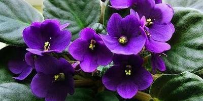 Как ухаживать за комнатными растениями и цветами?