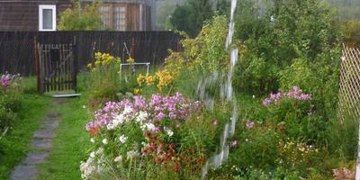 Дождь в палисаднике