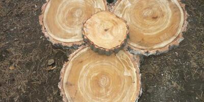 Оригинальный стол из природного материала