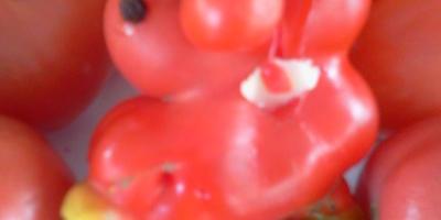 Синьор-помидор