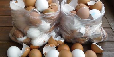 Как использовать яичную скорлупу? Где она в первую очередь необходима для хорошего урожая?