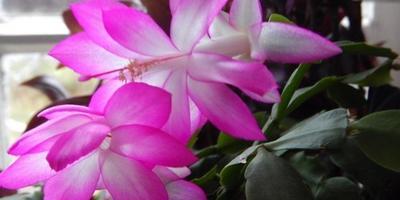 Мой цветочный садик