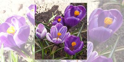 Мой сад: весна