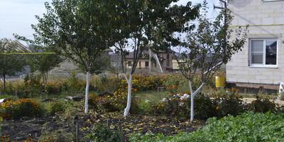 Нужно ли белить стволы деревьев на зиму и весной? В чем польза?