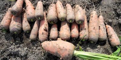 Один из наших любимых овощных кексов - морковный