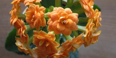 Оранжевый хоровод