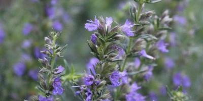 Мой синий сад 2