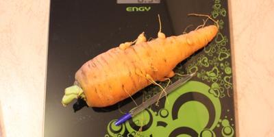 Моя гордость - морковь!