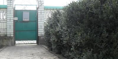 Забор и кусты