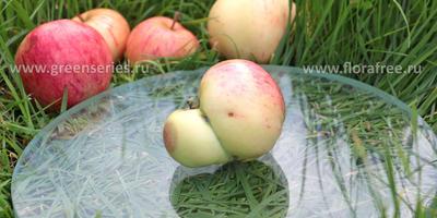 Сросшиеся фрукты - это аномалия?