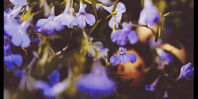 Маленькие лесные секреты ...))))