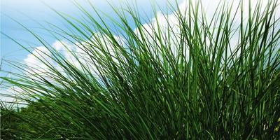Рацион на весь сезон, или Чем кормить газон