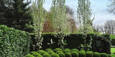 Хвойные растения с вертикальной формой кроны