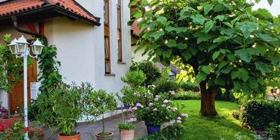 Высокие отношения, или Где и как сажать деревья