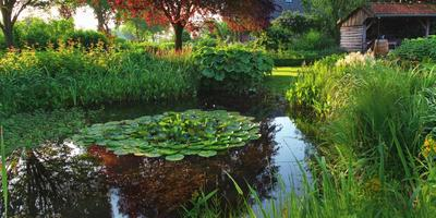 Как заложить пруд на даче и выбрать для него обитателей и растительное окружение