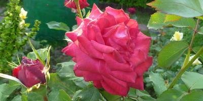 Цветочный июль на даче