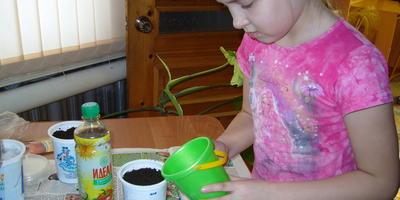 Дочка экспериментирует с посевом томатов