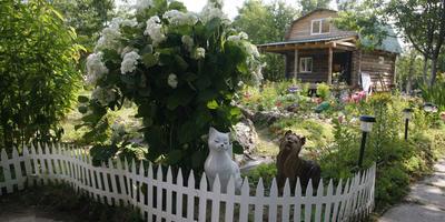 Распространенные ошибки в дизайне сада. Часть 3: аксессуары, зеркала и посадка растений рядами