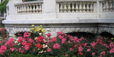 Цветы в разных точках Европы
