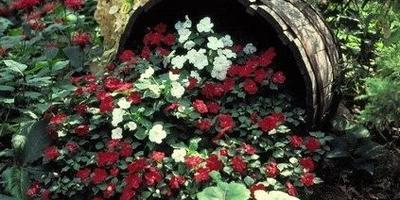 Что за цветочки?