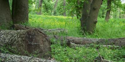 Лес от дачи - в 50 метрах. Тишина и пение птиц...