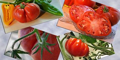 Мои любимые помидорки