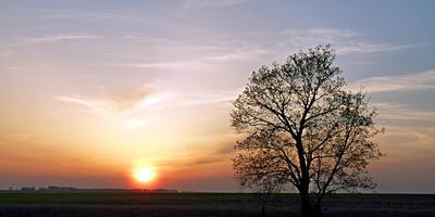 Одинокое дерево в лучах майского заката
