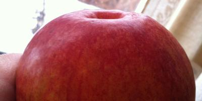 Замечательно хранится яблоко! Помогите определить сорт