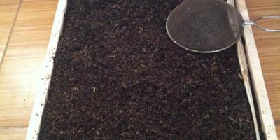 Каким образом лучше поступить с  использованным чаем?  Повышает ли он плодородие земли?
