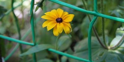 Подскажите название цветка!